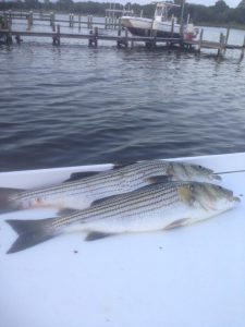Striped Bass Fishing In Maryland