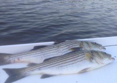 Manokin River Fishing