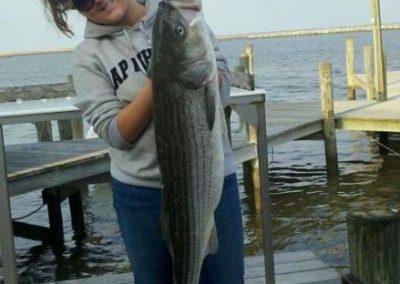 Wenona Striped Bass On The Islander