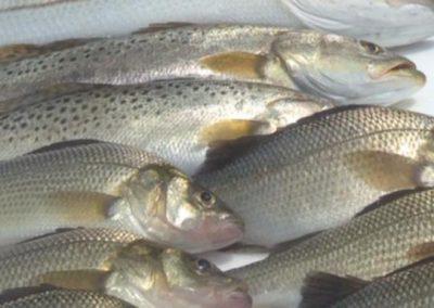 Great Fishing in Manokin River