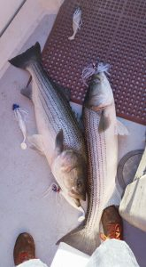 Striped Bass Tackle Care