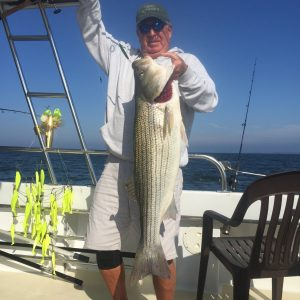 Striped Bass Fall Fishing