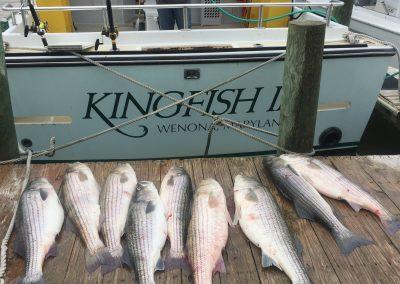 Choosing Striped Bass Lures