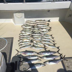 Chesapeake Bay Fishing Variety