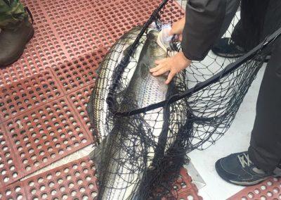 Double Down Striper Fishing