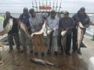 Tough Spring Stripers