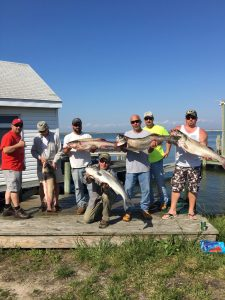 Chesapeake Bay Stripers